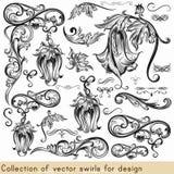 Sistema del vector de los elementos caligráficos para el diseño Vec caligráfico stock de ilustración