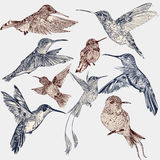 Sistema del vector de los pájaros dibujados mano detallada para el diseño libre illustration