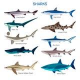 Sistema del vector de los pescados del tiburón en diseño plano del estilo Diferente tipo de colección de los iconos de la especie Imagen de archivo