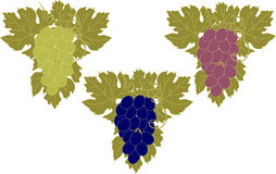 Sistema del vector de manojos de uvas Imagen de archivo libre de regalías