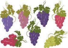 Sistema del vector de manojos de uvas Fotos de archivo