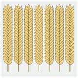 Sistema del vector de o?dos del trigo Bosquejo del cereal para la panader?a y el otro dise?o stock de ilustración