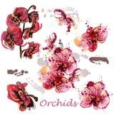 Sistema del vector de orquídeas dibujadas en estilo de la acuarela Fotos de archivo libres de regalías
