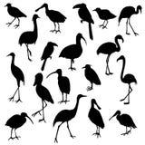 Sistema del vector de pájaros libre illustration