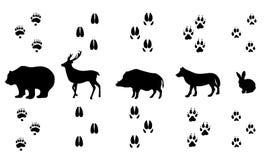 Sistema del vector de pistas animales de madera salvajes que caminan Foto de archivo libre de regalías