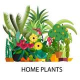 Sistema del vector de plantas interiores del hogar del árbol en potes Ilustración Imagen de archivo