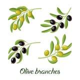 Sistema del vector de ramas de olivo realistas Imagen de archivo