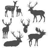 Sistema del vector de siluetas de los ciervos en diversas actitudes Imagen de archivo