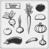 Sistema del vector de verduras aisladas en el fondo blanco Iconos del mercado de los granjeros stock de ilustración