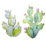 Sistema del vector del cactus de la acuarela ilustración del vector
