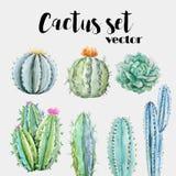 Sistema del vector del cactus de la acuarela stock de ilustración