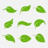 Sistema del vector del icono de las hojas Imágenes de archivo libres de regalías