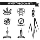 Sistema del vector del trigo Imagenes de archivo