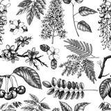 Sistema del vector del ejemplo floreciente dibujado mano de los árboles Elementos del diseño de la primavera Colección del bosque stock de ilustración