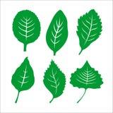 Sistema del vector del icono de las hojas aislado en el fondo blanco Imágenes de archivo libres de regalías
