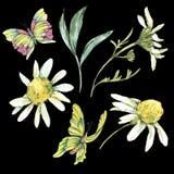 Sistema del verano de la acuarela de manzanilla, de hojas y de mariposas stock de ilustración