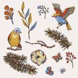 Sistema del vintage del vector de elementos, de pájaros, de ramas del abeto, de algodón, de flores y de mariposas naturales flora ilustración del vector