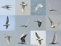 Sistema del vuelo de la gaviota Imagenes de archivo