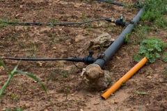 Sistema dell'irrigazione a goccia. Irrigazione a goccia di risparmio dell'acqua Immagine Stock