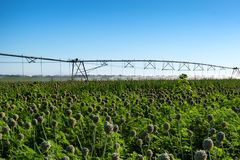 Sistema dell'irrigazione a goccia nel campo Fotografia Stock