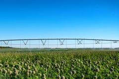 Sistema dell'irrigazione a goccia nel campo Immagini Stock