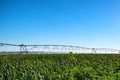 Sistema dell'irrigazione a goccia nel campo Fotografie Stock