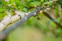 Sistema dell'irrigazione a goccia nel campo agricolo Acqua di risparmio Immagine Stock