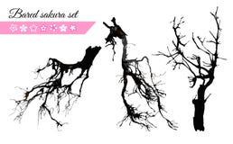 Sistema descubierto vector de la rama de Sakura libre illustration