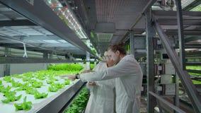 Sistema di coltivazione verticale moderno e suoi gli impiegati che prendono cura delle piante Produzione alimentare della pianta  stock footage