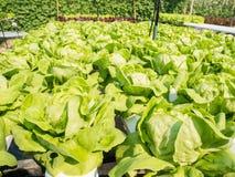 Sistema di coltura idroponica delle verdure Fotografia Stock Libera da Diritti