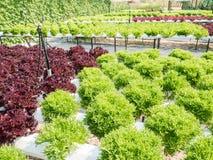 Sistema di coltura idroponica delle verdure Immagine Stock