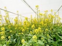 Sistema di coltura idroponica delle verdure in serra Immagini Stock