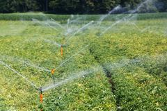 Sistema di Irrigational sul giacimento industriale della patata Fotografia Stock Libera da Diritti