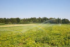 Sistema di Irrigational sull'esteso giacimento della patata Fotografie Stock