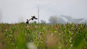 Sistema di irrigazione a pioggia della pistola della pioggia Immagini Stock