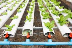 Sistema di verdure idroponico della piantagione Fotografie Stock Libere da Diritti