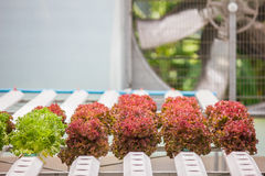 Sistema di verdure idroponico della piantagione Fotografia Stock