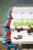 Sistema di verdure idroponico della piantagione Immagini Stock