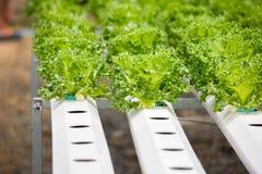 Sistema di verdure idroponico della piantagione Fotografia Stock Libera da Diritti