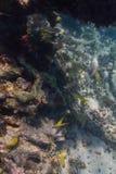 Sistema di vita dell'oceano Fotografia Stock Libera da Diritti