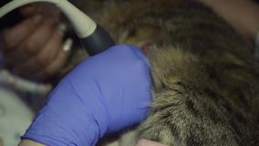 Sistema diagnostico di ultrasuono in clinica veterinaria video d archivio
