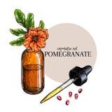 Sistema dibujado mano de aceite esencial Granada y flor del vector Hierba medicinal con la botella de cristal del dropper grabado Imagenes de archivo