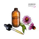 Sistema dibujado mano de aceites esenciales Flor del purpurea del echinacea del vector Hierba medicinal, botella de cristal del d Fotografía de archivo libre de regalías