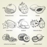Sistema dibujado mano de diversas frutas tropicales Iconos realistas del esquema de la comida sana Foto de archivo libre de regalías