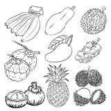 Sistema dibujado mano de diverso diseño tropical del bosquejo del fruta-vector stock de ilustración