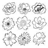 Sistema dibujado mano de la flor stock de ilustración