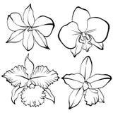 Sistema dibujado mano de la orquídea stock de ilustración