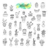Sistema dibujado mano de los Succulents y de los cactus Imágenes de archivo libres de regalías