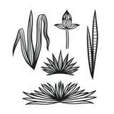 Sistema dibujado mano de plantas tropicales Foto de archivo