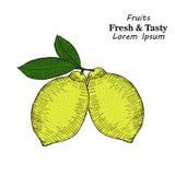 Sistema dibujado mano del estilo del bosquejo de fruta del limón con las hojas y el limón cortado ilustración del vector